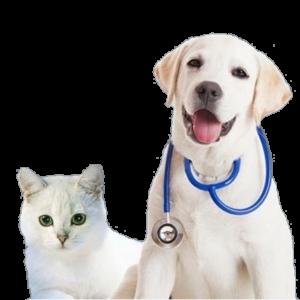 Сервис по поиску и сравнению ветеринарных клиник и зоомагазинов